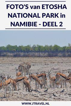 Een must do als je in Namibië rondreist, is een (meerdaags) bezoek aan Etosha National Park. Etosha National Park is het bekendste nationale park om wildlife te spotten in Namibië. Ik heb hier onder begeleiding van een ranger in een 4x4 een gamedrive gemaakt en veel wild gespot. Her zie deel 2 van mijn foto's van deze gamedrive door het Etosha National Park? #etoshanationalpark #wildlife #gamedrive #namibie #jtravel #jtravelblog #fotos