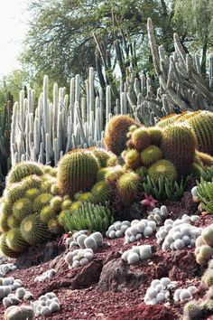 cacti at the huntington gardens via for me, for you
