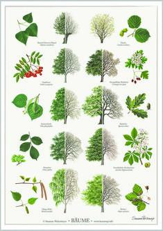 Bäume poster A2