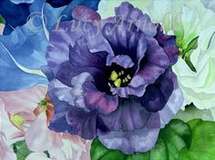 Google Image Result for http://www.lucyarnold.com/Purple-lisianthus-lg.jpg
