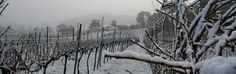 Now this is SUPER COOL CLIMATE! - Orange Wine Region