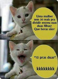 Gatinho 01