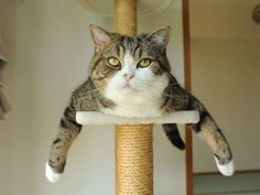 """""""Look!"""" """"It's a bird, its a plane""""! """"No, it's SuperCat, the fearless feline. His only weakness is kryptonip!"""""""