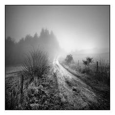 photographie noir et blanc de paysage : photo noir et blanc d'un chemin et bosquet dans la brume, le brouillard - black and white photography