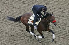 Preakness Stakes 2016: Which horse will win Saturday's race?