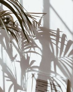 Close your eyes and let the palm shadows dance across your face.tropical dreams come true in style. What does your Friday look like? Lumiere Photo, Shadow Photography, Nature Photography, Summer Photography, White Photography, Pics Art, Shadow Play, Shadow Tree, White Aesthetic