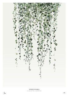 My Deer - A5 Kaart / Mini Poster - Botanics / String of Pearls