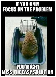 True. Lol  Humor  Funny memes  Relatable posts  Funny advice  Animal memes  Cats 