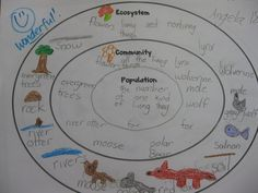ecosystem, community, and population- concentric circle map- would divide into biotic and abiotic factors- could color code to reflect producers and consumers:
