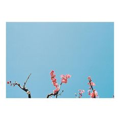 _ 街や人を撮るのが苦手だと気づいた そもそも何故写真を撮り始めたのかというと 花や木々街の中にある自然由来のものを 切り取りたいと思ったからだった 初心に帰って 昨日は昭和記念公園を散歩した どんな写真が撮れただろうか _ #nikon #nikonf2 by siori_q