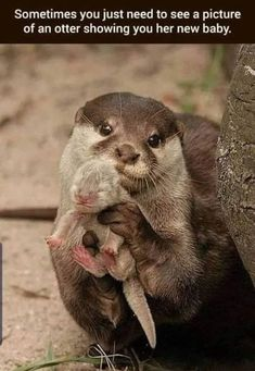 Wholesome Animal Memes To Start The Week Off Right - World's largest collection of cat memes and other animals Cute Little Animals, Cute Funny Animals, Cute Dogs, Cute Babies, Happy Animals, Otters Funny, Smiling Animals, Funny Animal Memes, Cat Memes