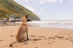 Belgian Malinois dog sitting (beach) by Irantzu Arbaizagoitia on Creative Market