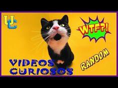 Vídeos incríveis 2017 - Os vídeos WORLD mais incrível / VIDEOS RANDOM / ...