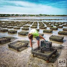 Massachusetts  Pic of the day 08.08.15  Photographer @molliemcphee  Congratulations✨ And this folks, is what an oyster farm looks like. The oysters grow in these little cages for 1-3 years before they're ready for market. At high tide they're 10ft. under water.  #capecod #brewsterMA #brewsteroysters #oysterfarm #oysters #eatlocal #scenesofMA #visitMA #mynewenglandsummer  #capecodinsta #capecodlife  #justcapethings #wickedcapecod #saltlife  #massachusetts  #discoveraround