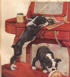 vintage boston terrier pups