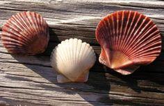 Shells for Shell ❤