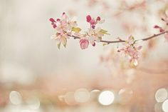 Cherry Blossom Art Print by joyhey Flowers Nature, Spring Flowers, Simply Beautiful, Beautiful Flowers, Pretty Pictures, Spring Time, Pretty In Pink, Pure Products, Photography