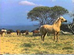 A lenda do cavalo prateado online dating