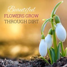 Just like the flowers, the same applies in life too. You need to be strong and patient! http://www.fnp.ae/ #fernsnpetalsUAE #flowers #strong
