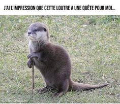 A place to post all your Dungeon and Dragons memes, funny pictures and other humorous content! Cute Funny Animals, Funny Animal Pictures, Funny Cute, Cute Pictures, Hilarious, Otters Funny, Funny Work, Animals And Pets, Baby Animals