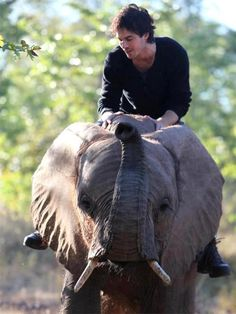 Ian Somerhalder and an Elephant HOLY CANOLI I JUST DIED!!