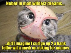 I need monies! - LOLcats is the best place to find and submit funny cat memes and other silly cat materials to share with the world. We find the funny cats that make you LOL so that you don't have to. Funny Kid Memes, Dog Quotes Funny, Cat Quotes, Funny Animal Memes, Cat Memes, Funny Kids, Funny Animals, Funny Dog Photos, Funny Animal Pictures