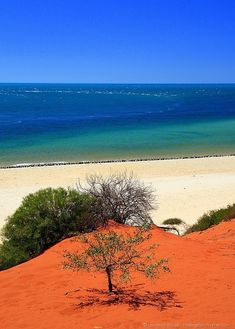 Red sand and sea, National Park, Western Australia (by Francois Perron) by echkbet