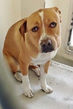 Sad Cooper is at the Carson Animal Shelter. He only has to Friday to leave the shelter. Has rescue interest needs foster. SUPER URGENT!