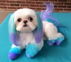 I recently saw a post asking if people thought creative grooming is cruel. Creative grooming is beyond your average grooming! Dog Grooming Styles, Dog Grooming Tips, Poodle Grooming, Dog Hair Dye, Dog Dye, Cortes Poodle, Cute Puppies, Cute Dogs, Corgi Puppies
