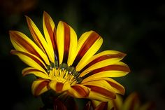 """""""The Gazania"""" by Ernie Echols won 3rd place in FLOWERS in Fall Colors contest."""