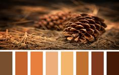 Find Your Fall Colors Fall is about to start and the temperatures will go down. What about your next home improvement job? Orange Color Palettes, Colour Pallette, Fall Color Schemes, Color Combos, Warm Colors, Neutral Colors, Shades Of Brown Paint, Pantone 2020, Mood And Tone