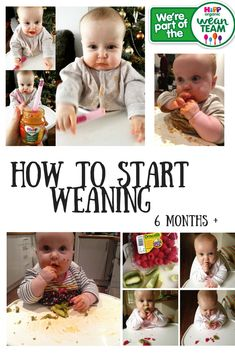 How to get started with weaning - 6 months onwards  Luisa began weaning with finger foods at around 6 months. We were lucking enough to be invited to join the HiPP Organic wean team. We'll be getting expert weaning advice from their nutritonists and sharing our journey on the blog.   #weanteam #HiPPOrganic #blw #foodbeforeoneisjustforfun #babyled #firsttastes #weaning