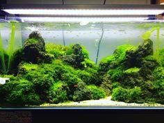 Home Aquarium, Aquarium Ideas, Fish Tank Design, Amazing Aquariums, Cool Tanks, Paludarium, Tanked Aquariums, Freshwater Aquarium, Beautiful Landscapes
