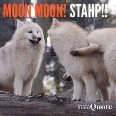 Dammit moon moon!