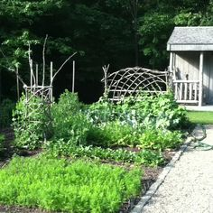 Rustic Garden Trellis and Tomato cage by Whitten Hill Studio.