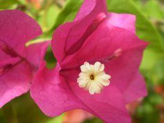 Floreciendo 8