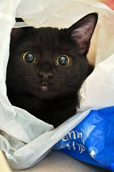 black cat in some kind of carry-all