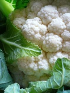 Be picky. What you want is fresh, young and whole. The ideal cauli is small and tightly budded; leaves crisp, gently cradling and curling around its precious, pale cargo. There should be no sign, absolutely none, of yellowing or, as revolting as it sounds, browning; just pure, creamy curds. Like a bouquet of pretty, white flowers. A head halved and wrapped in plastic is of no use to The Cauliflower Hunter. You need to employ your sense of smell here - and it must not ever, never-ever, smell…