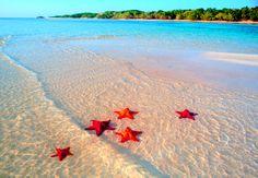 orange starfish , sandy beach, blue water