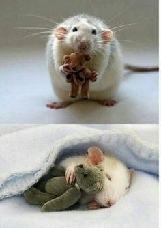a woman crafts little teddy bears for her pet mouse