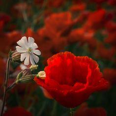Wildflowers II - Wildflowers II
