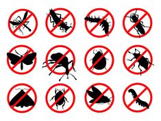 Abu Dhabi pest control services and treatments. Find the best professional pest control companies to help you get your home or office cleaned from ants, bed bugs, cockroaches, and rats in Abu Dhabi using spray and gel. Best Pest Control, Pest Control Services, Silhouettes, Household Pests, Bees And Wasps, Humming Bird Feeders, Information Graphics, Silhouette Vector, Antique Art