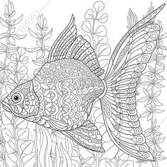 Stock vector of 'Zentangle stylized cartoon goldfish swimming among seaweed (alga). Hand drawn sketch for adult antistress coloring page, T-shirt emblem, logo or tattoo with doodle, zentangle, floral design elements. Adult Coloring Pages, Cartoon Coloring Pages, Animal Coloring Pages, Colouring Pages, Coloring Sheets, Coloring Books, Doodle Coloring, Mandala Coloring, Mandala Art