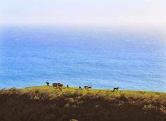 Free Spirit Fun Blog - Pacific Coast Highway - Horses by the Sea