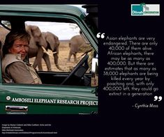 Today as part of our Motivation Monday series and to commemorate Save the Elephant Day we present Cynthia Moss. Founder of the Amboseli Trust for Elephants in Kenya and USA, Cynthia Moss has dedicated her life to researching the population and behavior of the Amboseli elephants.Let us learn from her dedication and passion! #Elephant #DiversityofLife #MotivationMonday #CynthiaMoss #Amboseli #Conservation #30YearsofDilmah #NoCompromise #SaveElephantDay #SaveElephants