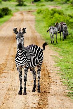 I love zebras!!