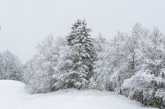Nussbüel, Braunwald im Kanton Glarus Schweiz Snow, Outdoor, Forests, Outdoors, Outdoor Living, Garden, Eyes