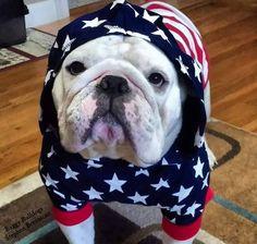 Baggy Bulldogs Baby Puppies, Bulldog Puppies, Cute Puppies, Cute Dogs, Dogs And Puppies, Funny Bulldog, Animals Beautiful, Cute Animals, Dog Rules