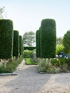 Lesson 1. Lend formal structure a sly sense of humor.    Like living exclamation points, these trees punctuate the landscape with an elegant wit. Conway fashioned his allée from fastigiate hornbeams (Carpinus betulus 'Fastigiata'), which naturally tend toward a columnar shape.