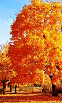 Otoño   (Autumn...when we most appreciate the trees for their beauty.)